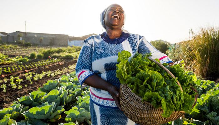 Afrikanerin auf Feld