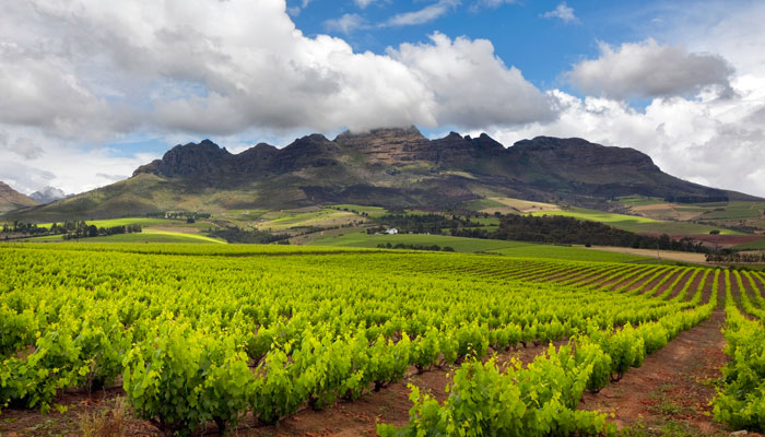 Tafelberg Wein