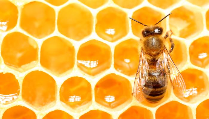 Biene gegen Flugzeug